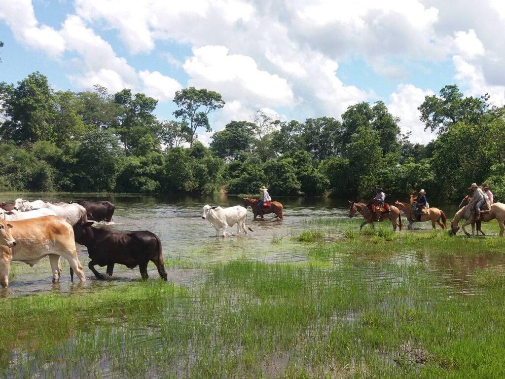 Na fazenda, turista pode acompanhar a rotina do povo pantaneiro. Foto: Visit Pantanal