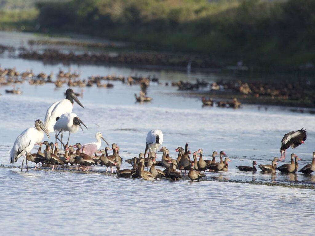 Contemple belezas naturais do nosso Pantanal. Foto: Divulgação