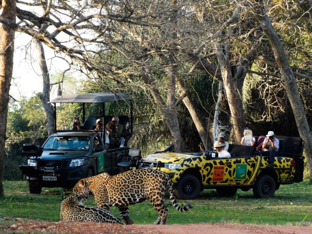 Safaria é uma das atrações no Refúgio Caiman. Foto: Visit Pantanal